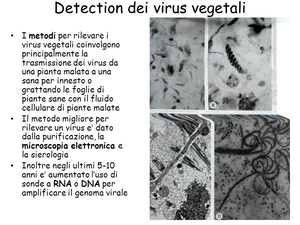 Detection dei virus vegetali