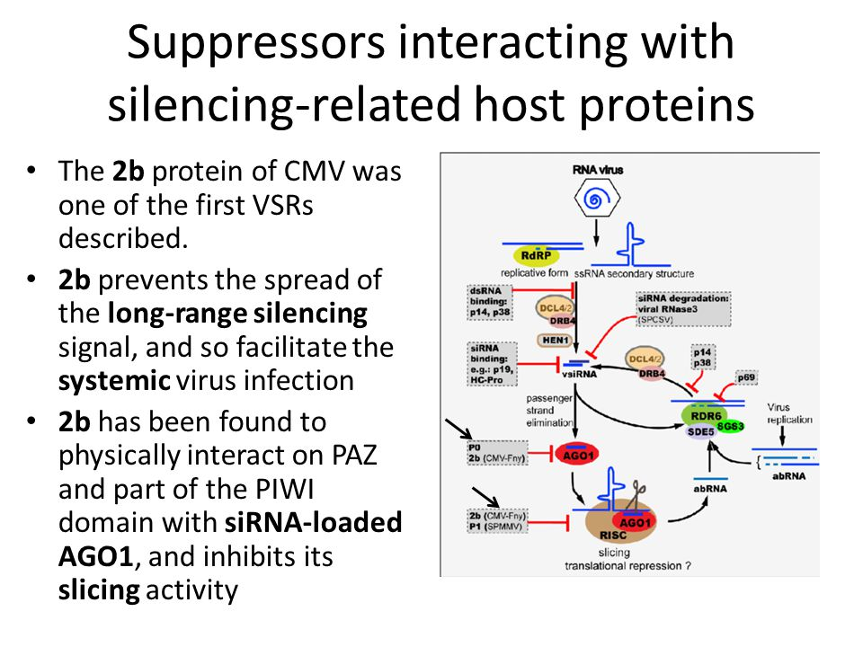 Suppressors interacting with silencing-related host proteins