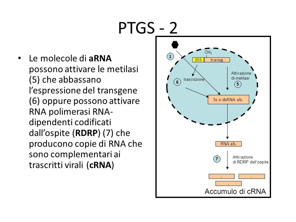 PTGS - 2 CH3.
