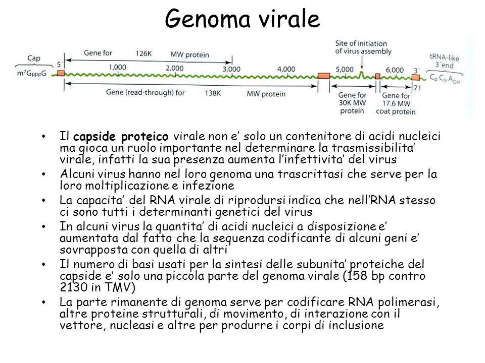 Genoma virale