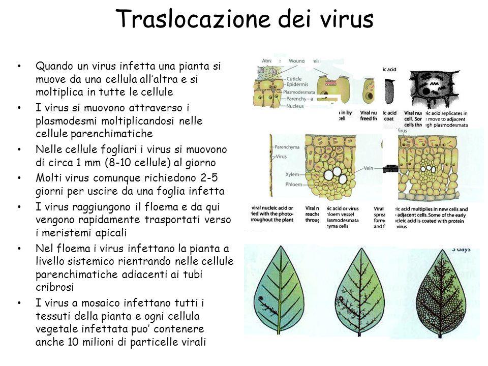 Traslocazione dei virus