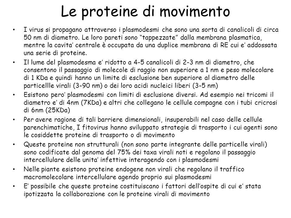 Le proteine di movimento
