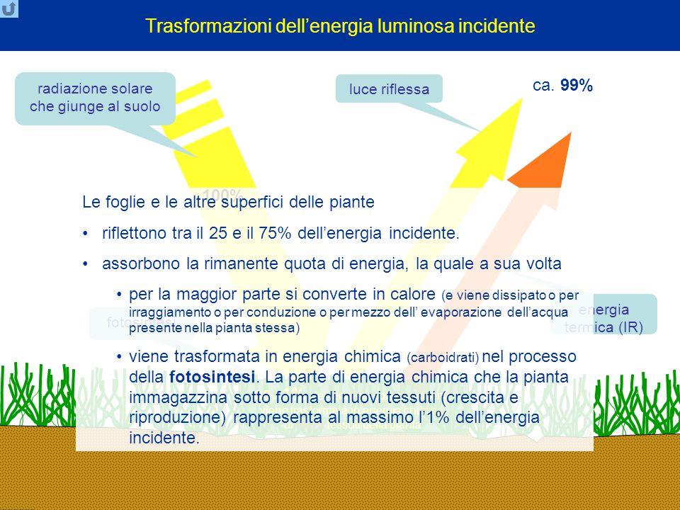 Trasformazioni dell'energia luminosa incidente