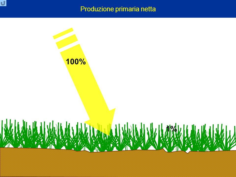 Produzione primaria netta