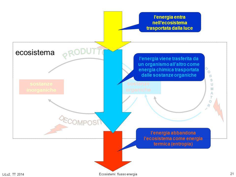 ecosistema CONSUMATORI PRODUTTORI DECOMPOSITORI sostanze inorganiche