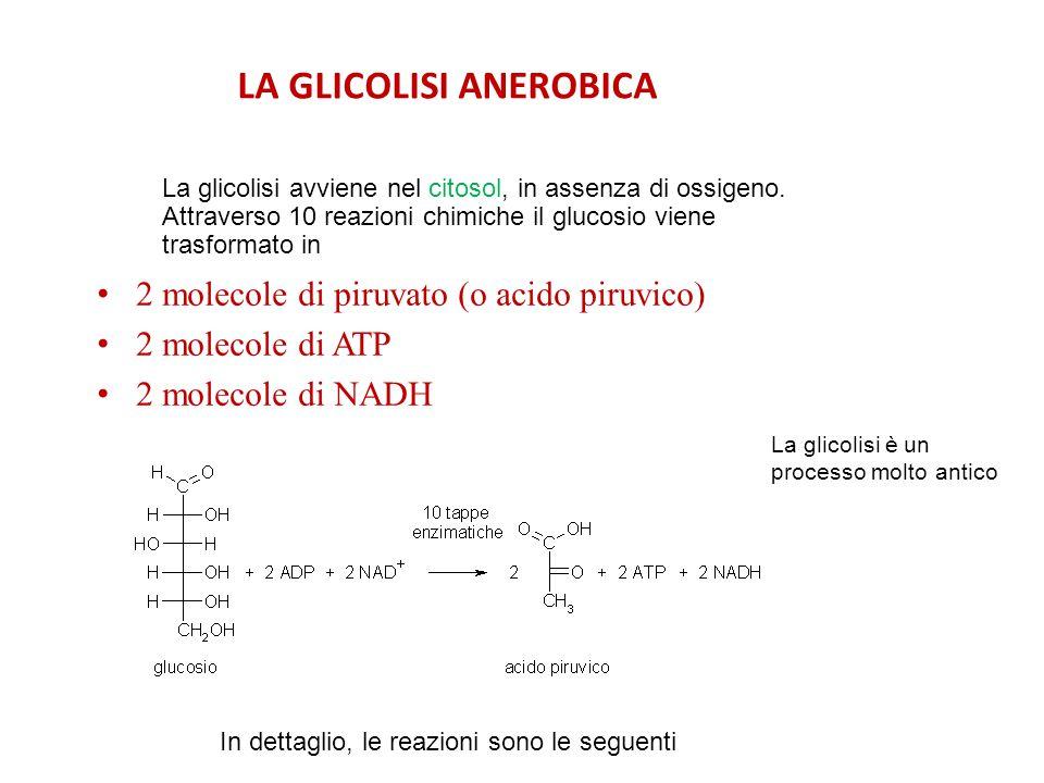 LA GLICOLISI ANEROBICA