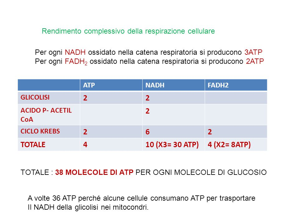 2 6 TOTALE 4 10 (X3= 30 ATP) 4 (X2= 8ATP)