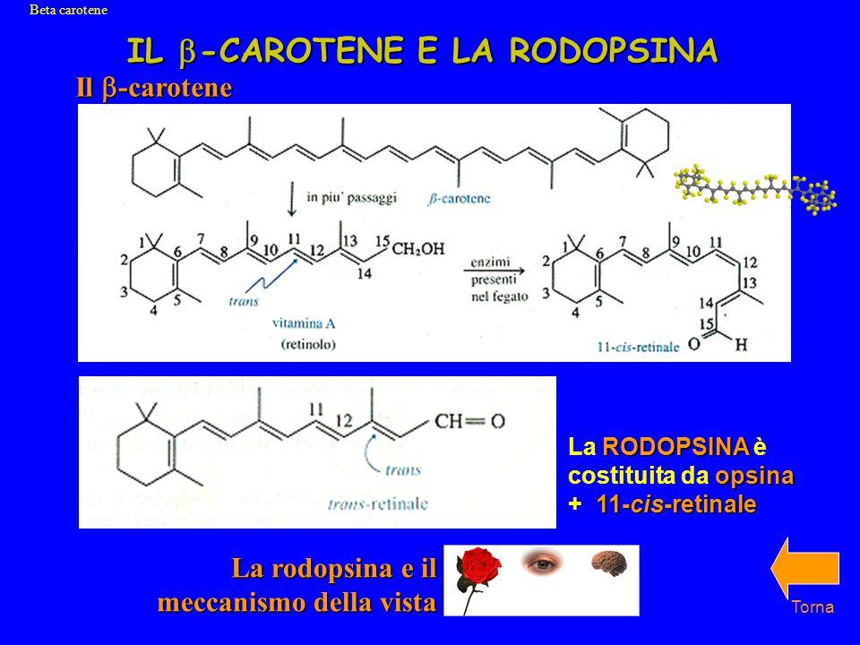 IL b-CAROTENE E LA RODOPSINA
