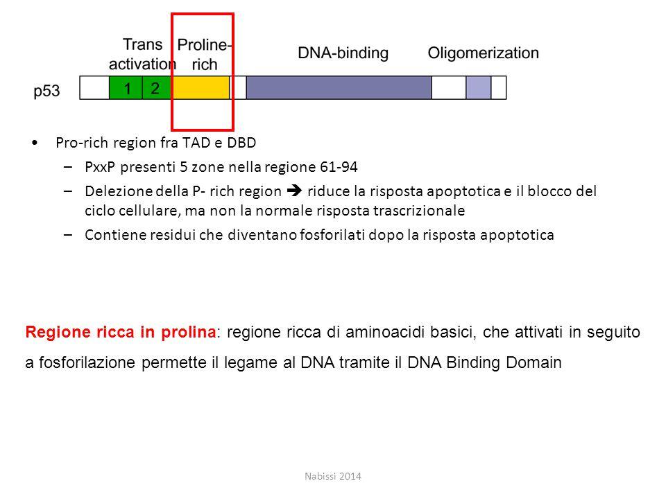 Pro-rich region fra TAD e DBD PxxP presenti 5 zone nella regione 61-94