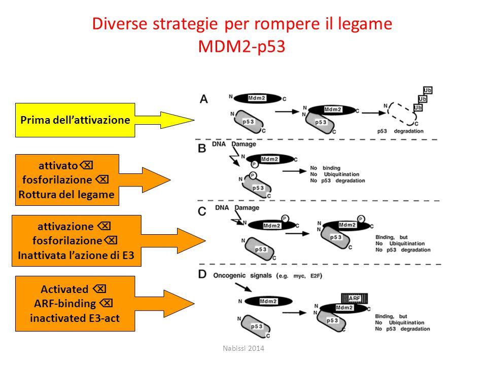 Diverse strategie per rompere il legame MDM2-p53