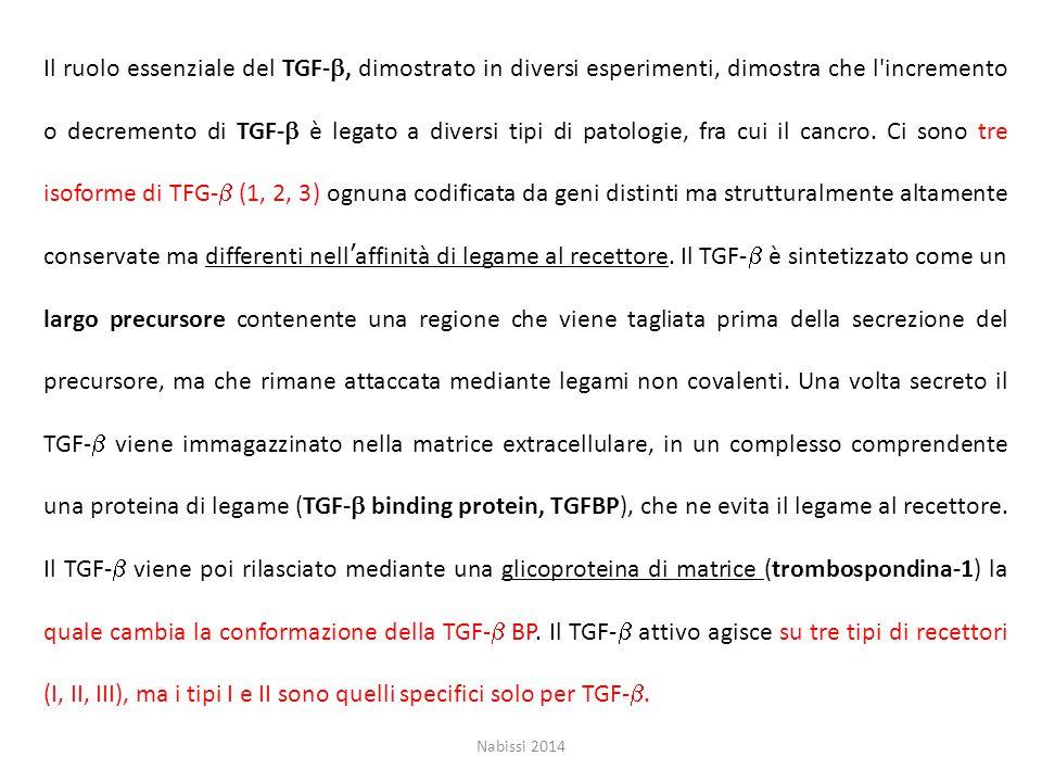 Il ruolo essenziale del TGF-b, dimostrato in diversi esperimenti, dimostra che l incremento o decremento di TGF-b è legato a diversi tipi di patologie, fra cui il cancro. Ci sono tre isoforme di TFG-b (1, 2, 3) ognuna codificata da geni distinti ma strutturalmente altamente conservate ma differenti nell'affinità di legame al recettore. Il TGF-b è sintetizzato come un largo precursore contenente una regione che viene tagliata prima della secrezione del precursore, ma che rimane attaccata mediante legami non covalenti. Una volta secreto il TGF-b viene immagazzinato nella matrice extracellulare, in un complesso comprendente una proteina di legame (TGF-b binding protein, TGFBP), che ne evita il legame al recettore. Il TGF-b viene poi rilasciato mediante una glicoproteina di matrice (trombospondina-1) la quale cambia la conformazione della TGF-b BP. Il TGF-b attivo agisce su tre tipi di recettori (I, II, III), ma i tipi I e II sono quelli specifici solo per TGF-b.