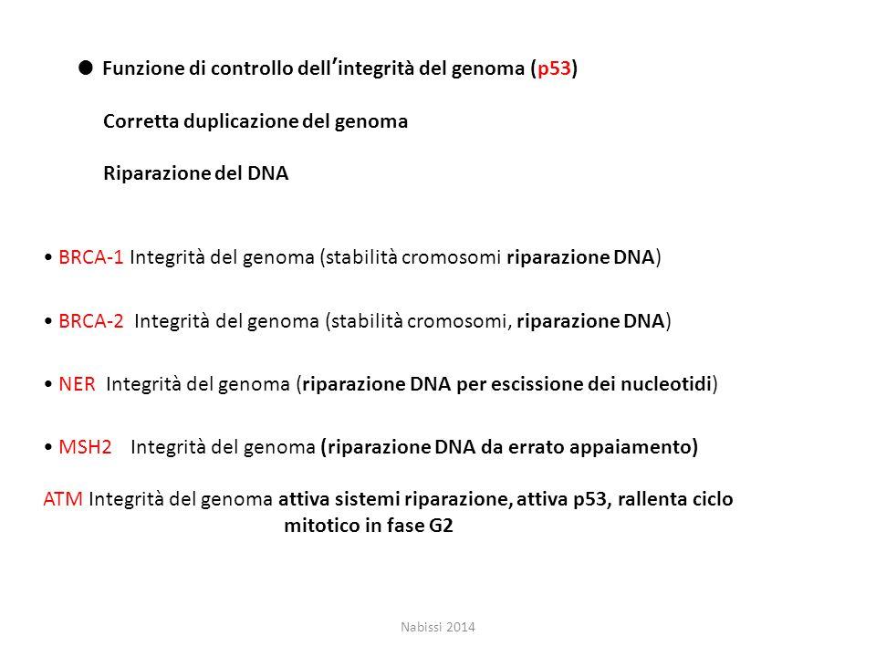 ● Funzione di controllo dell'integrità del genoma (p53)