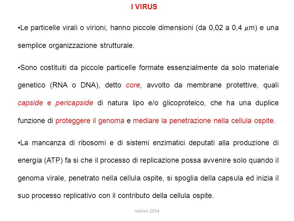 I VIRUS Le particelle virali o virioni, hanno piccole dimensioni (da 0,02 a 0,4 m) e una semplice organizzazione strutturale.