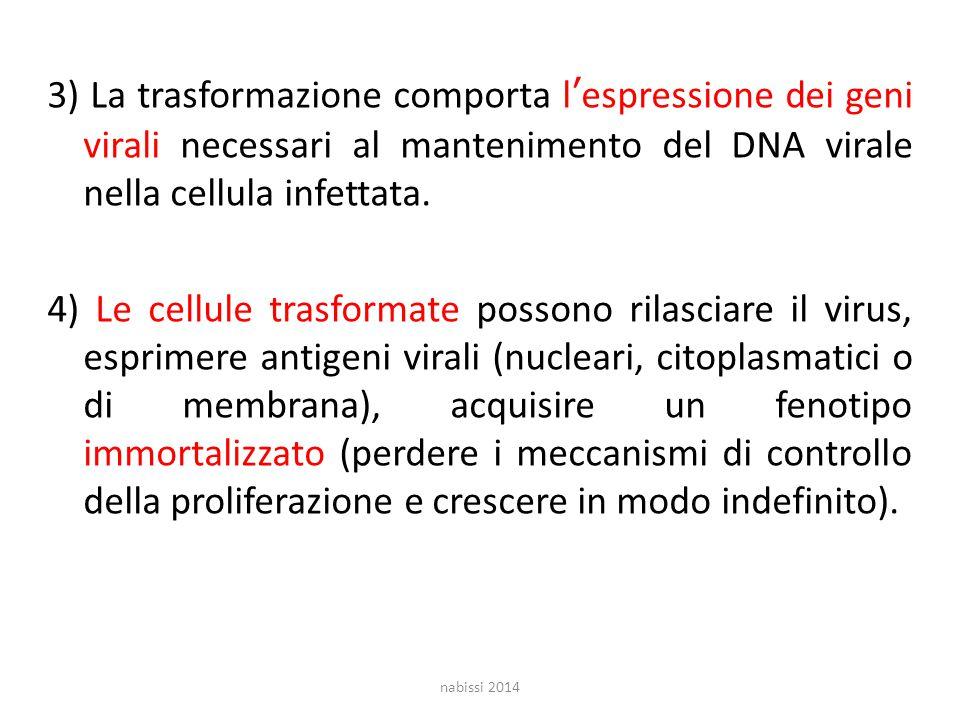 3) La trasformazione comporta l'espressione dei geni virali necessari al mantenimento del DNA virale nella cellula infettata.
