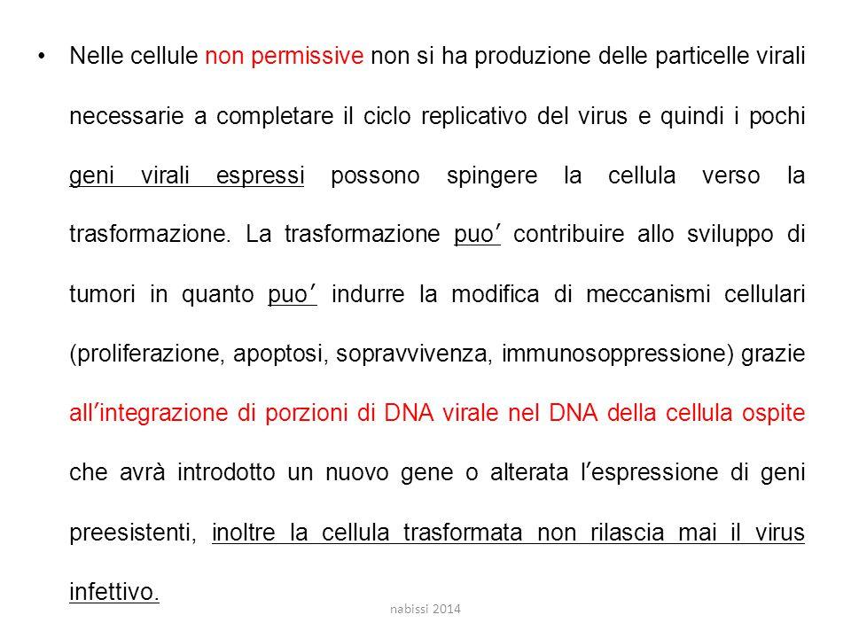 Nelle cellule non permissive non si ha produzione delle particelle virali necessarie a completare il ciclo replicativo del virus e quindi i pochi geni virali espressi possono spingere la cellula verso la trasformazione. La trasformazione puo' contribuire allo sviluppo di tumori in quanto puo' indurre la modifica di meccanismi cellulari (proliferazione, apoptosi, sopravvivenza, immunosoppressione) grazie all'integrazione di porzioni di DNA virale nel DNA della cellula ospite che avrà introdotto un nuovo gene o alterata l'espressione di geni preesistenti, inoltre la cellula trasformata non rilascia mai il virus infettivo.