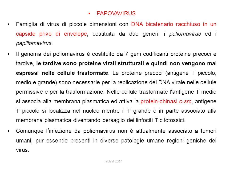 PAPOVAVIRUS
