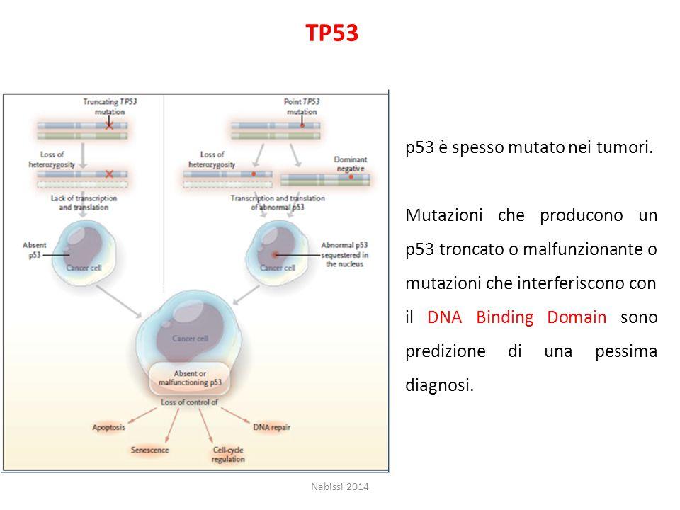 TP53 p53 è spesso mutato nei tumori.