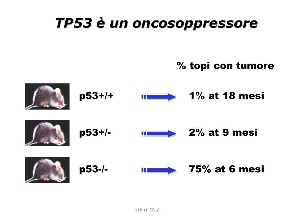 TP53 è un oncosoppressore