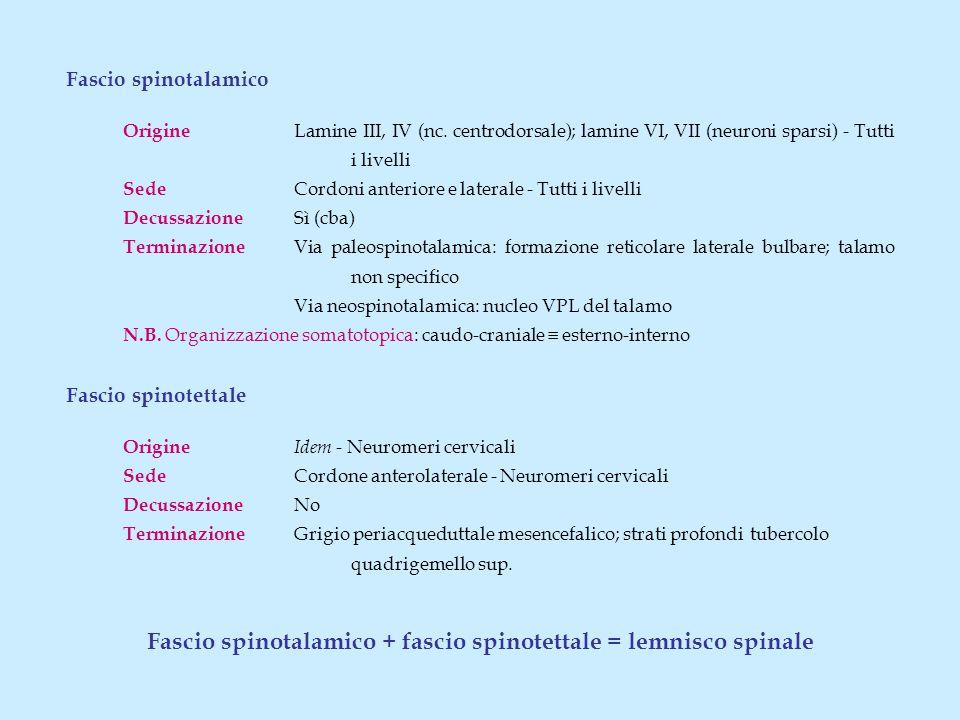 Fascio spinotalamico + fascio spinotettale = lemnisco spinale