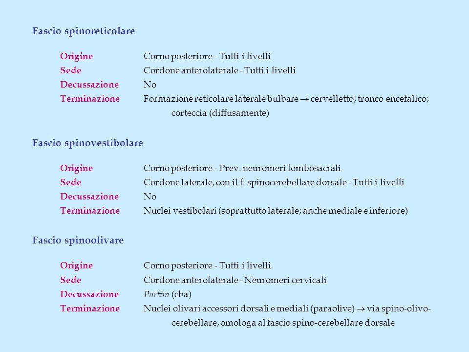 Fascio spinoreticolare