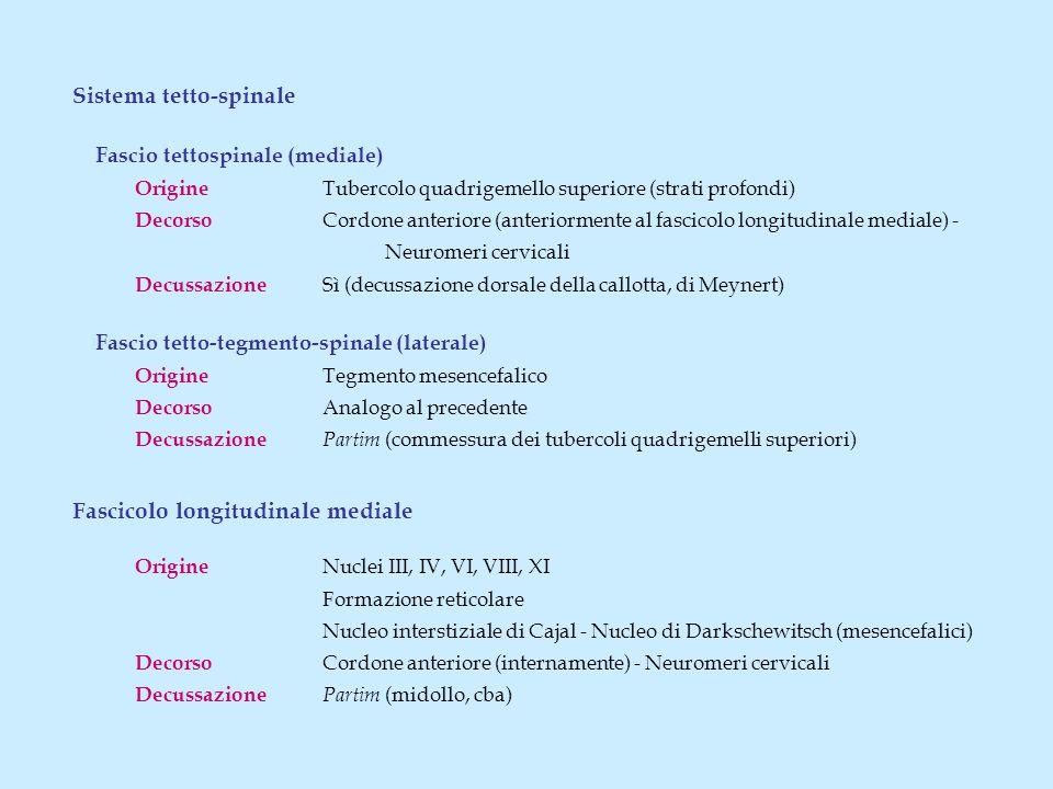 Sistema tetto-spinale Fascio tettospinale (mediale)