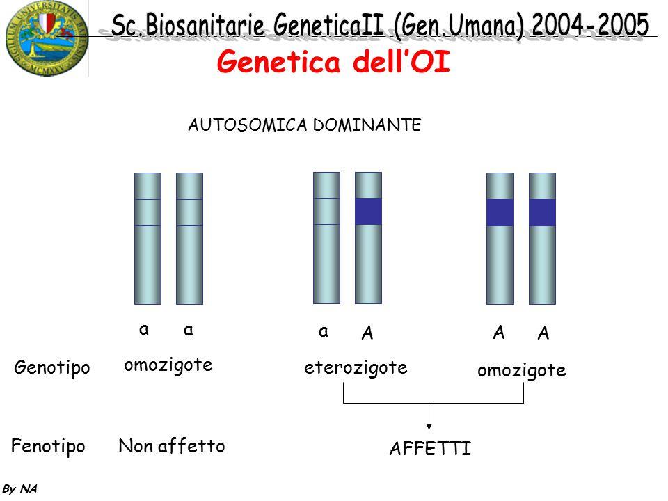 Genetica dell'OI a a a A A A Genotipo omozigote eterozigote omozigote
