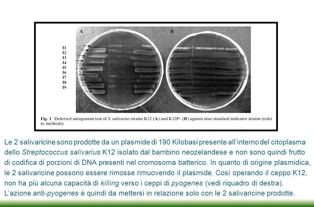 Le 2 salivaricine sono prodotte da un plasmide di 190 Kilobasi presente all'interno del citoplasma
