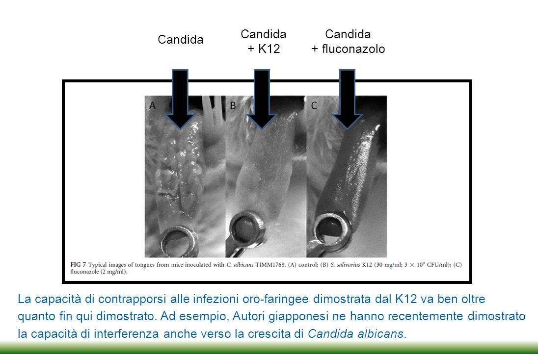 Candida + K12. Candida. + fluconazolo. Candida. La capacità di contrapporsi alle infezioni oro-faringee dimostrata dal K12 va ben oltre.