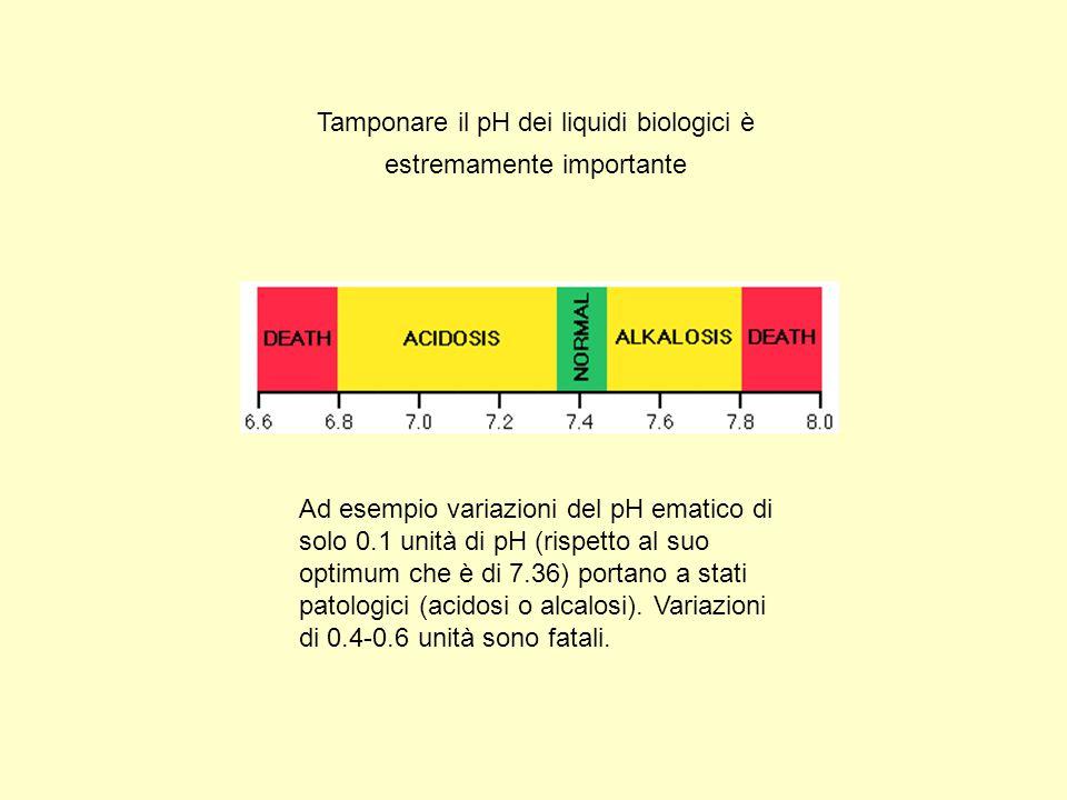 Tamponare il pH dei liquidi biologici è estremamente importante