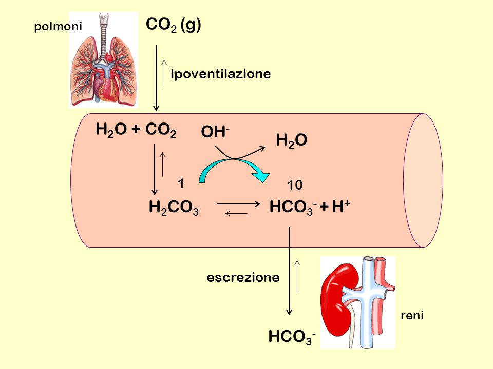 CO2 (g) H2O + CO2 OH- H2O H2CO3 HCO3- + H+ HCO3- ipoventilazione 1 10