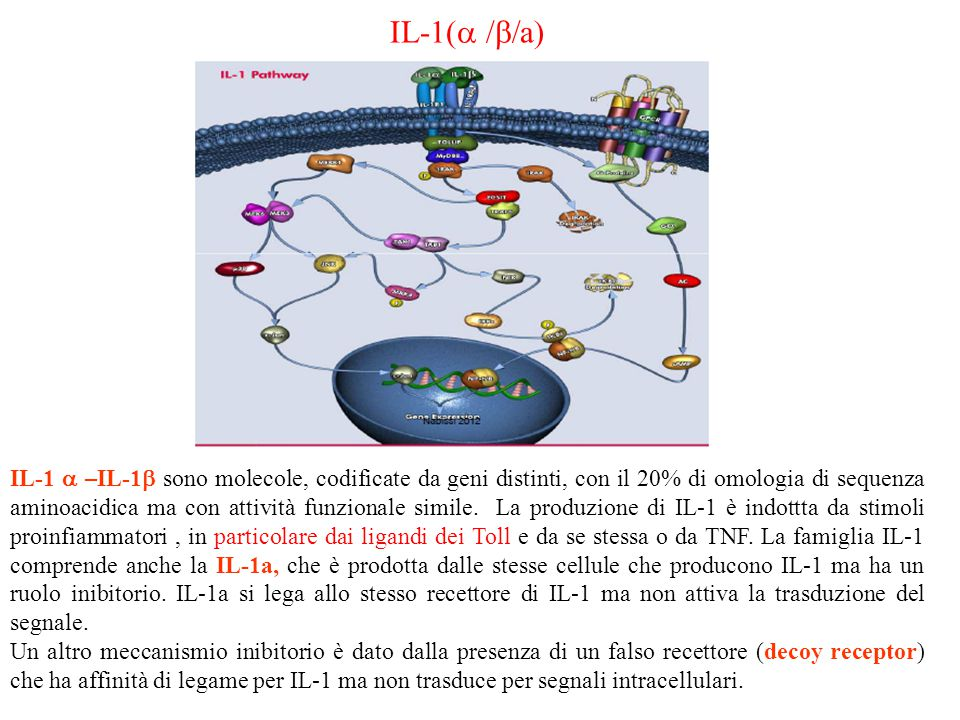 IL-1(a /b/a)