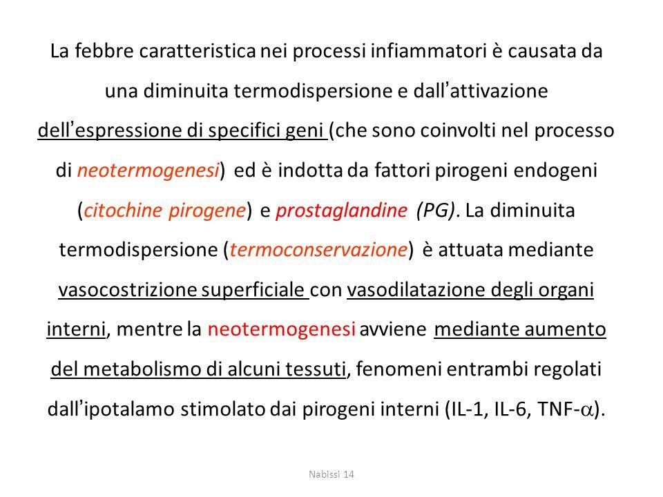 La febbre caratteristica nei processi infiammatori è causata da una diminuita termodispersione e dall'attivazione dell'espressione di specifici geni (che sono coinvolti nel processo di neotermogenesi) ed è indotta da fattori pirogeni endogeni (citochine pirogene) e prostaglandine (PG). La diminuita termodispersione (termoconservazione) è attuata mediante vasocostrizione superficiale con vasodilatazione degli organi interni, mentre la neotermogenesi avviene mediante aumento del metabolismo di alcuni tessuti, fenomeni entrambi regolati dall'ipotalamo stimolato dai pirogeni interni (IL-1, IL-6, TNF-a).