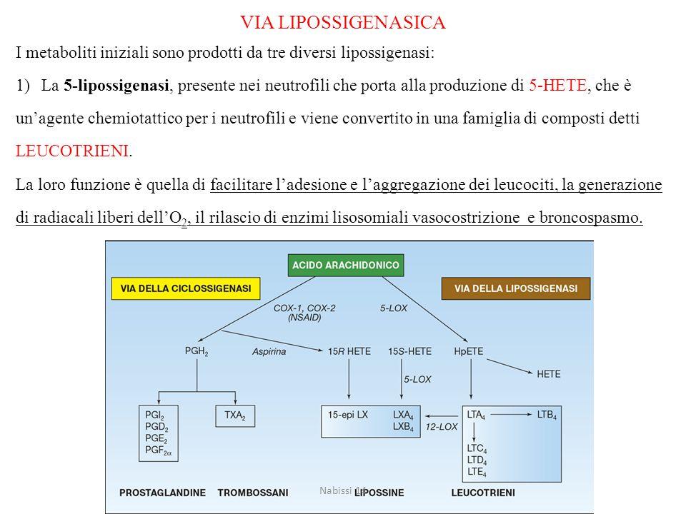 VIA LIPOSSIGENASICA I metaboliti iniziali sono prodotti da tre diversi lipossigenasi: