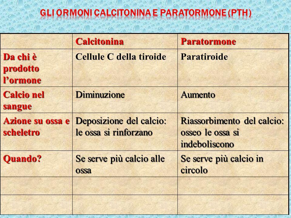 Gli ormoni calcitonina e paratormone (pTH)