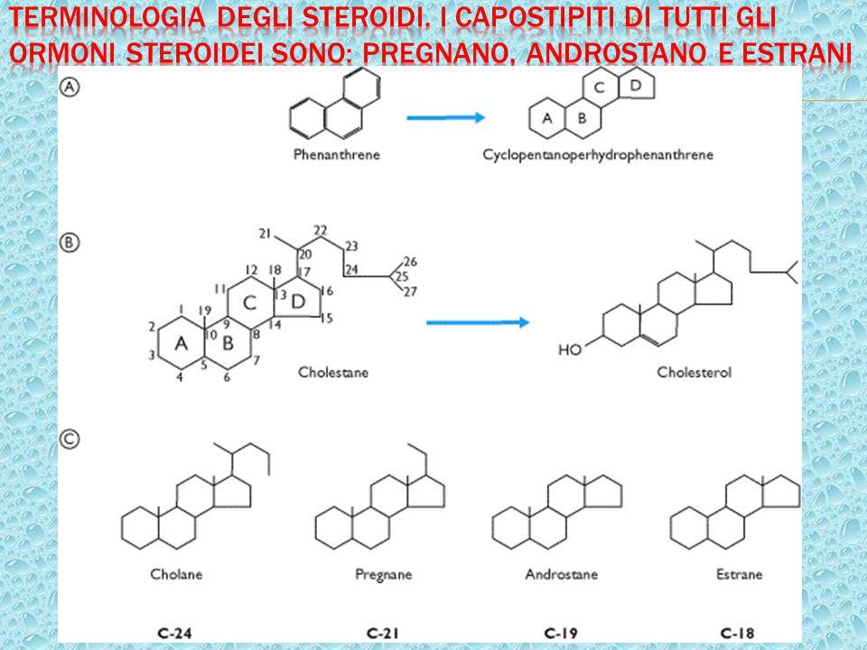 Terminologia degli steroidi