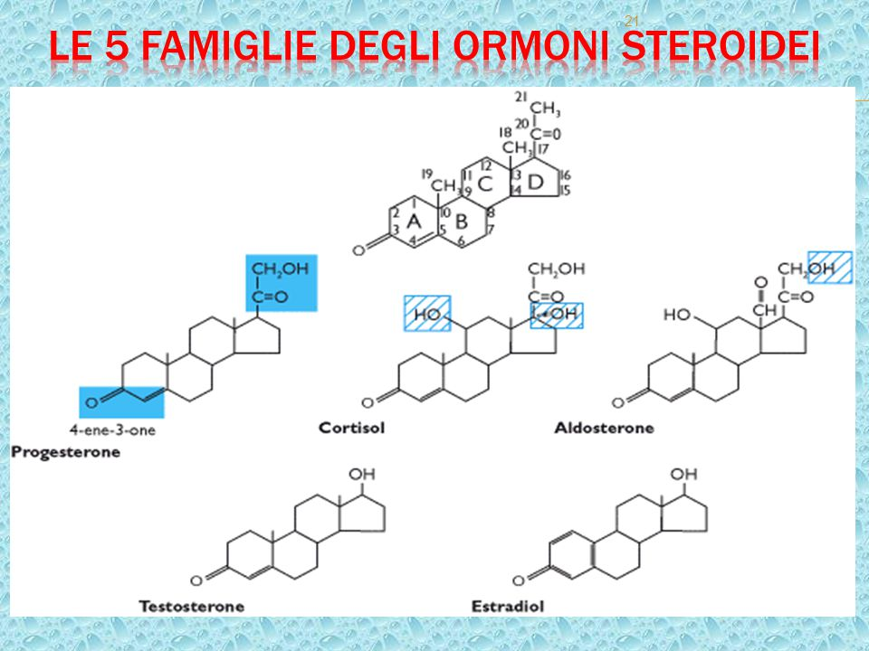 Le 5 famiglie degli ormoni steroidei