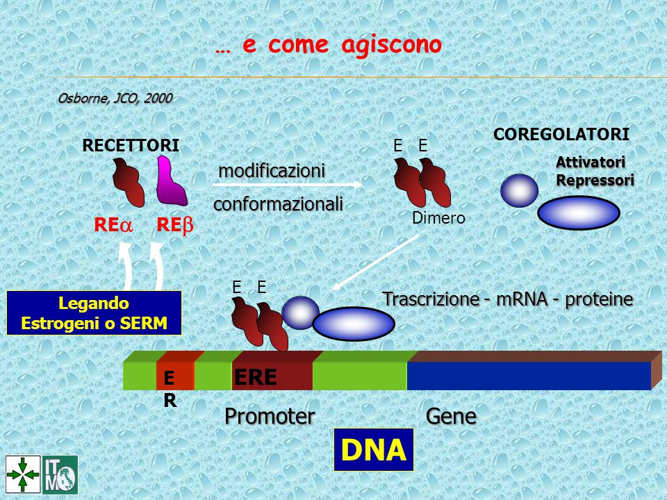 DNA … e come agiscono ERE Promoter Gene ER modificazioni