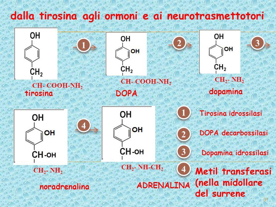 dalla tirosina agli ormoni e ai neurotrasmettotori