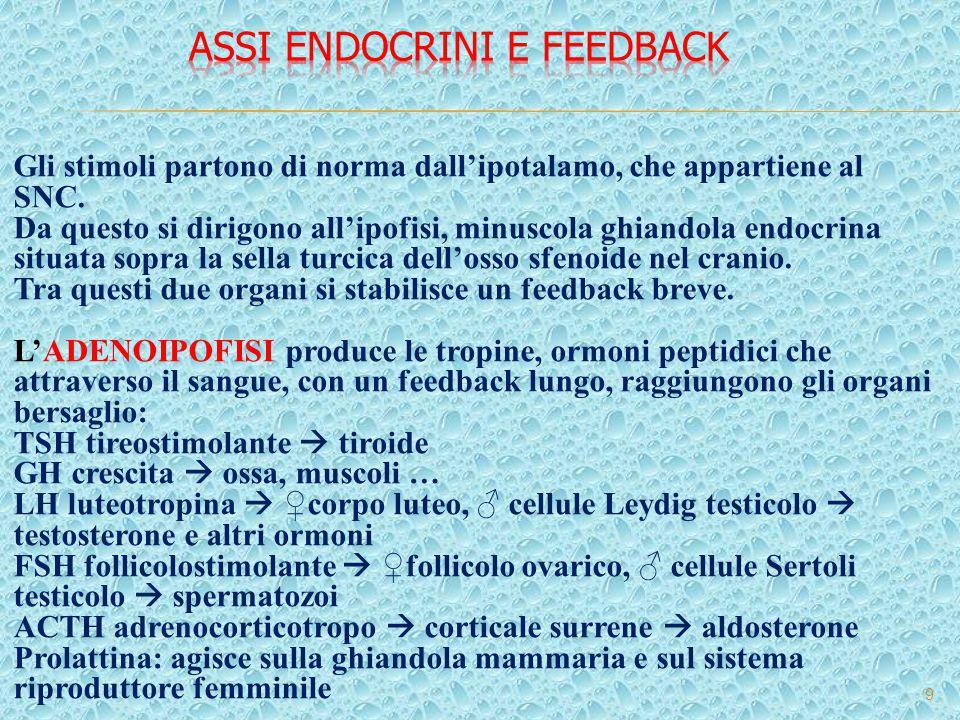 Assi endocrini e feedback