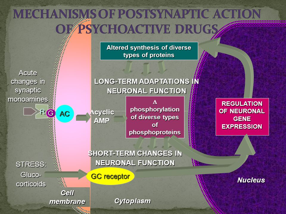 MECHANISMS OF POSTSYNAPTIC ACTION OF PSYCHOACTIVE DRUGS