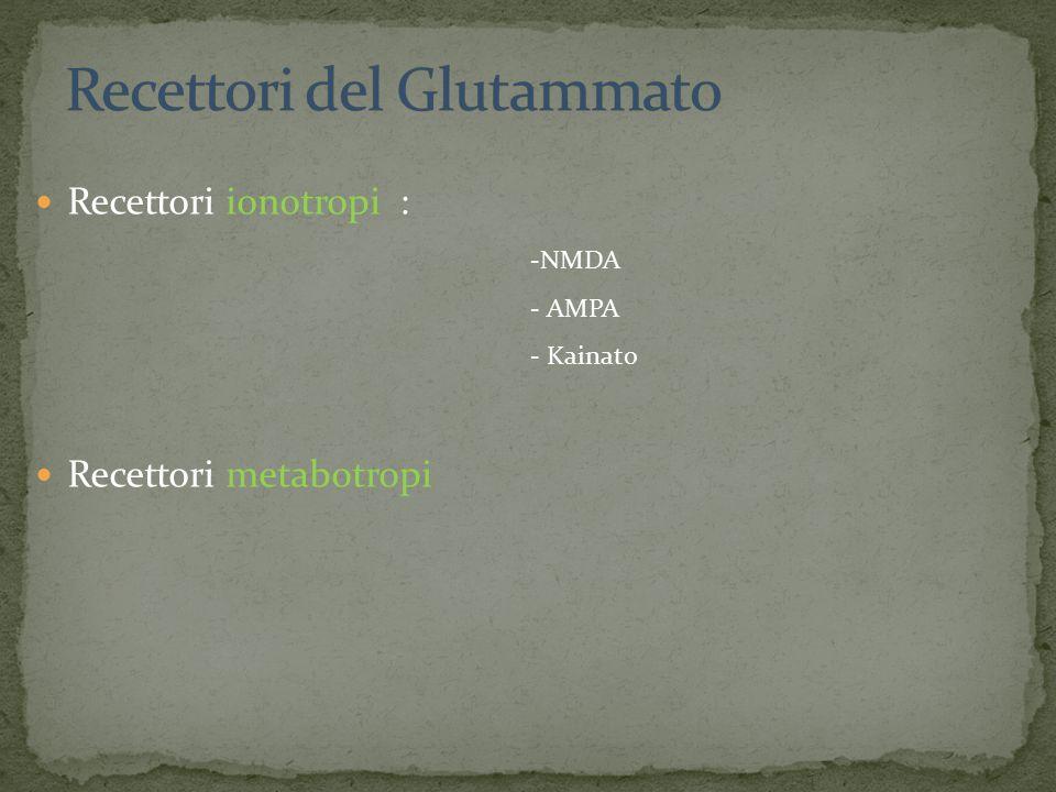 Recettori del Glutammato