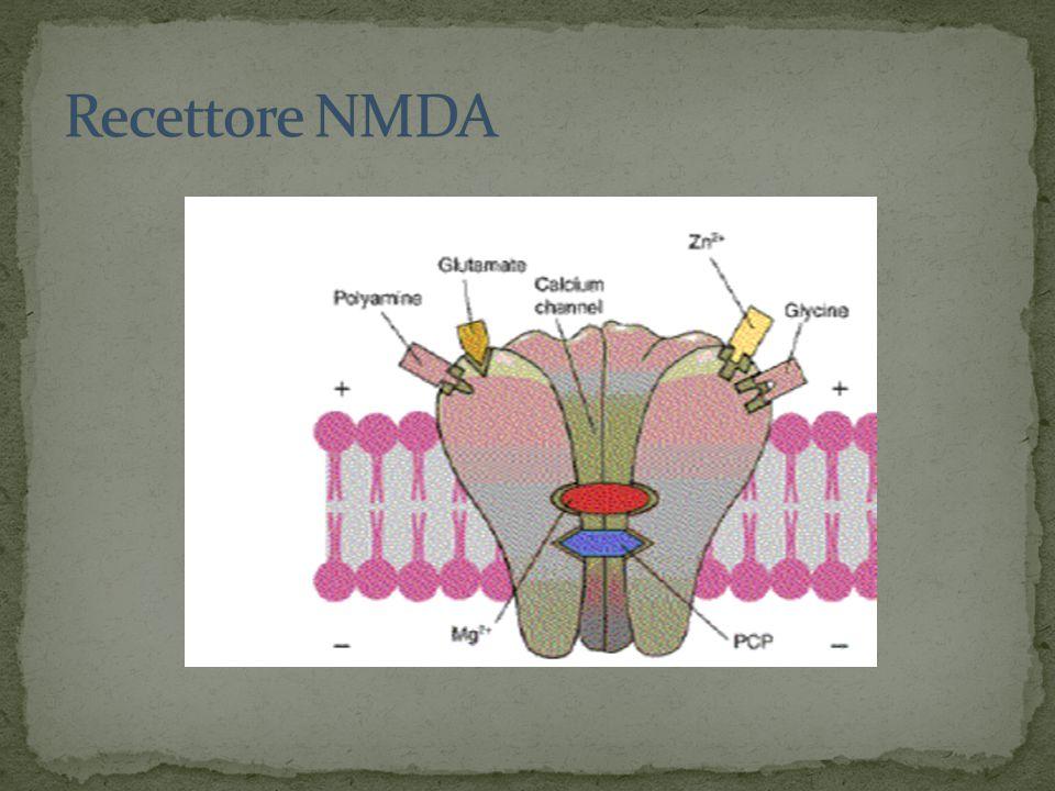 Recettore NMDA