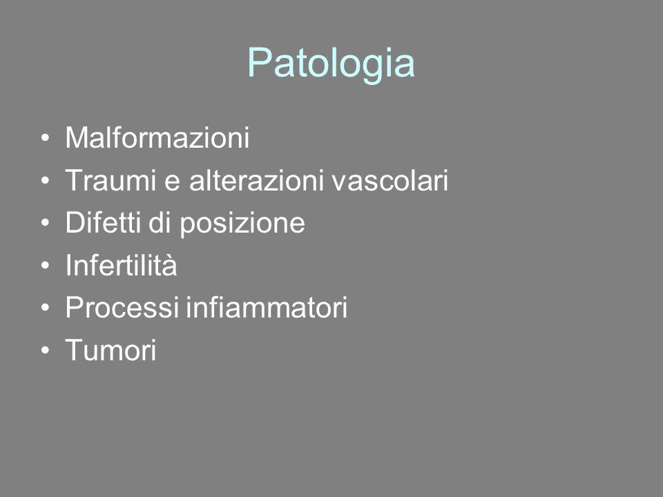 Patologia Malformazioni Traumi e alterazioni vascolari