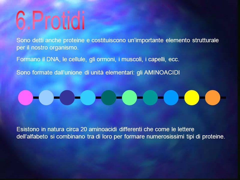 6.Protidi Sono detti anche proteine e costituiscono un'importante elemento strutturale per il nostro organismo.