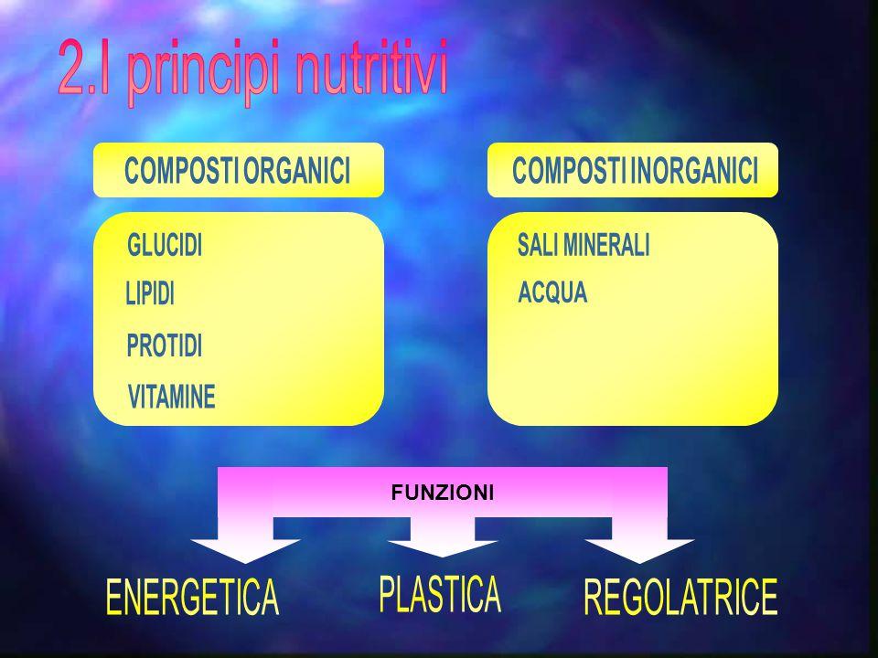 2.I principi nutritivi ENERGETICA PLASTICA REGOLATRICE