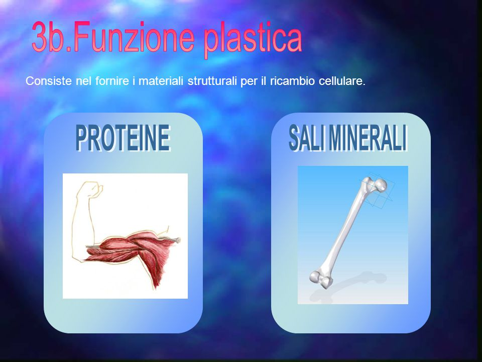 3b.Funzione plastica PROTEINE SALI MINERALI