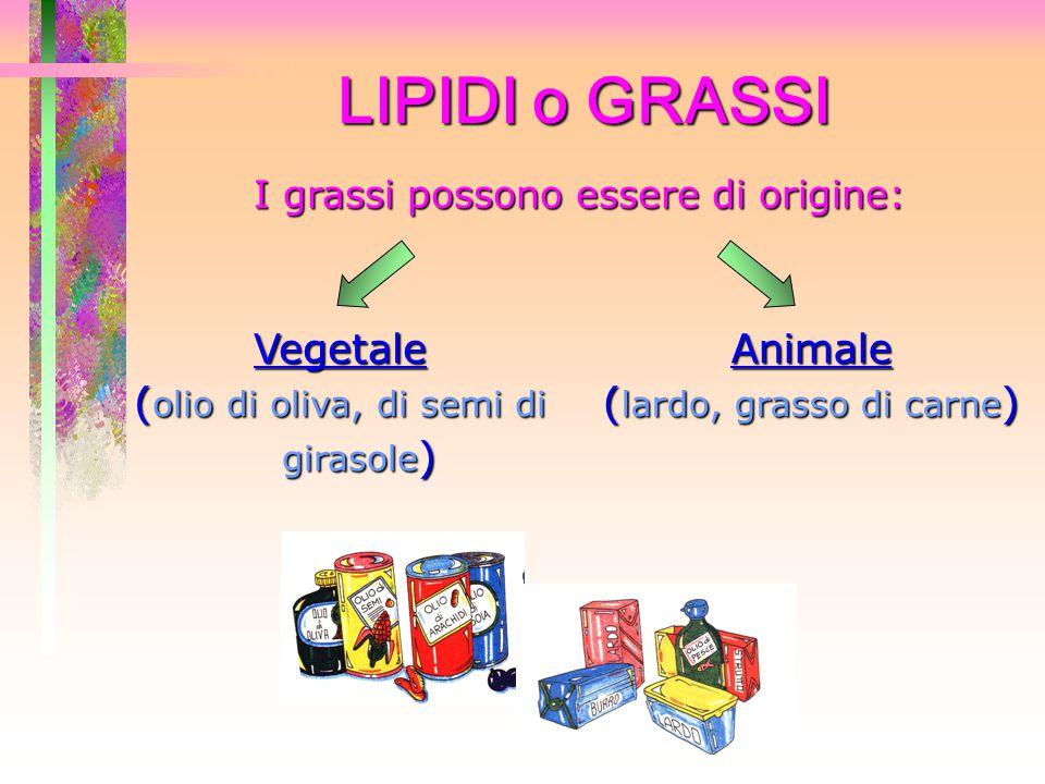 LIPIDI o GRASSI Vegetale (olio di oliva, di semi di girasole) Animale