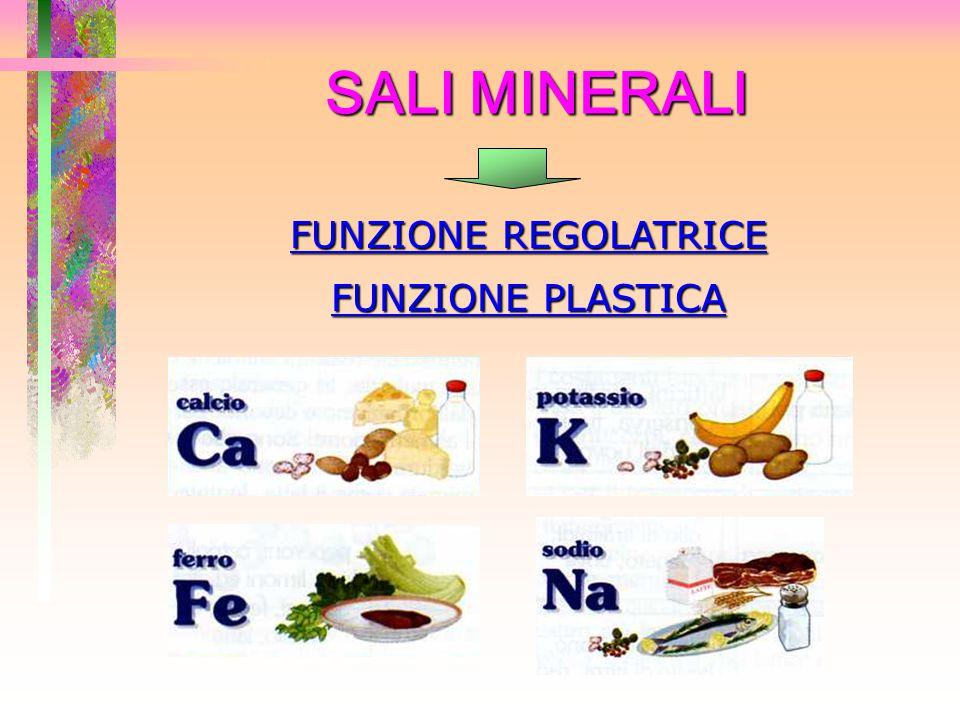 SALI MINERALI FUNZIONE REGOLATRICE FUNZIONE PLASTICA