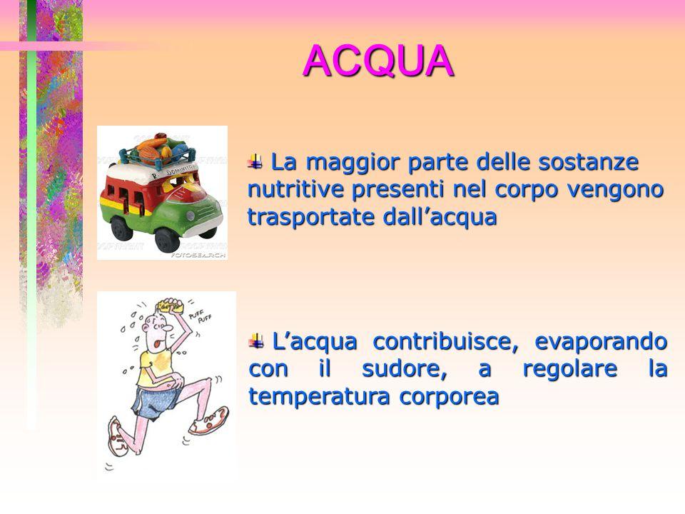 ACQUA La maggior parte delle sostanze nutritive presenti nel corpo vengono trasportate dall'acqua.