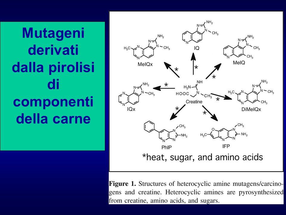 Mutageni derivati dalla pirolisi di componenti della carne